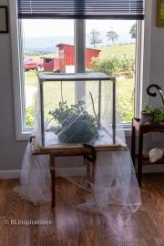 Caterpillar Enclosure in Sunroom