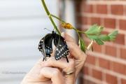 Butterfly Drying Wings