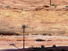 Osprey Nest in Glen Canyon