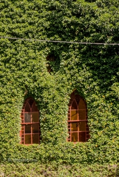 Ivy Covered Church - Gothic Windows