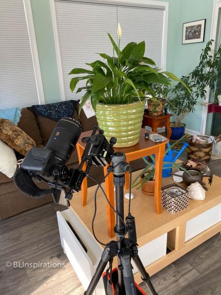 Camera setup for Peace Lily 2