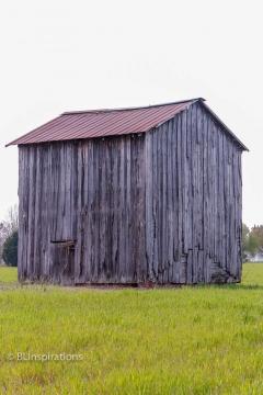 Johnston County, NC Tobacco Barn 3